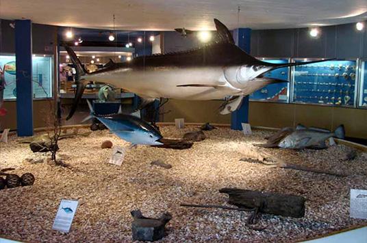 Museu Oceanográfico - IOUSP - São Paulo - SP - BRASIL